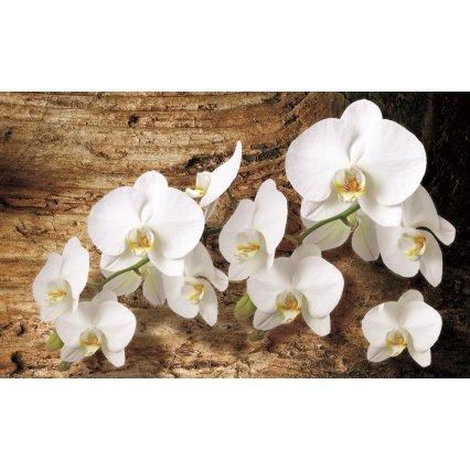 Fototapety Biela orchidea 3