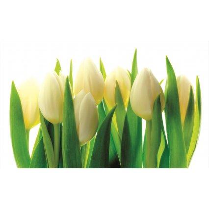Fototapeta Biele tulipány
